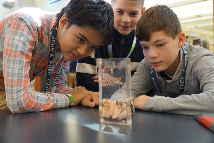 boys looking at objects in glass