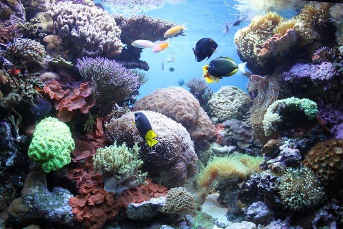 new-england-aquarium-coral