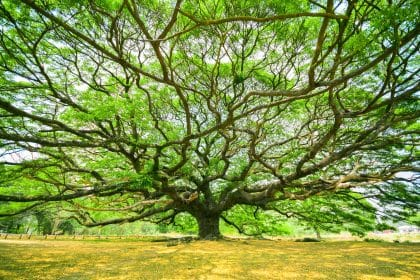 tree-stock-image